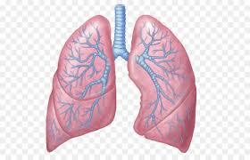 ĐTHT tăng cường chức năng phổi